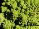 broccoflower1.jpg