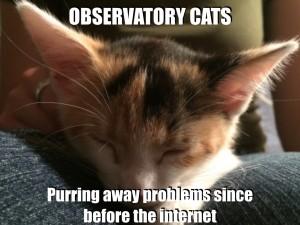 @ObservatoryCats